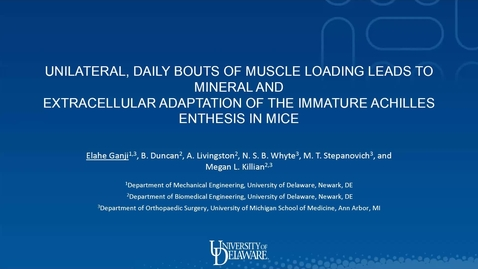 Thumbnail for entry Unilateral, daily bouts of muscle loading leads to mineral and extracellular adaptation of the immature Achilles enthesis in mice, Elahe Ganji