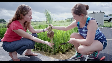 Thumbnail for entry UD Summer Scholar Studies How to Protect Rice from Arsenic