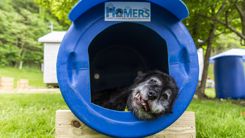 Thumbnail for entry Virginia Tech veterinarians and technicians build emergency relief shelters for local dogs in crisis