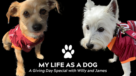 Thumbnail for entry My life as a dog: A Giving Day special with Willy and James