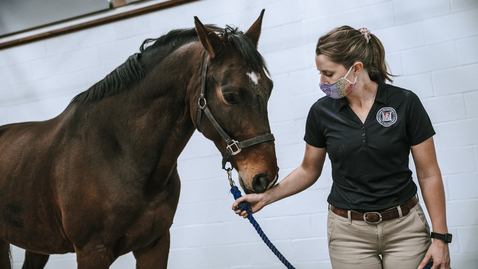Thumbnail for entry Equine Medical Center continues to provide premier, full-service equine care during COVID-19