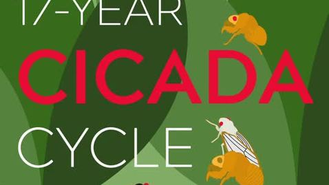 Thumbnail for entry 17-Year Cicada Cycle