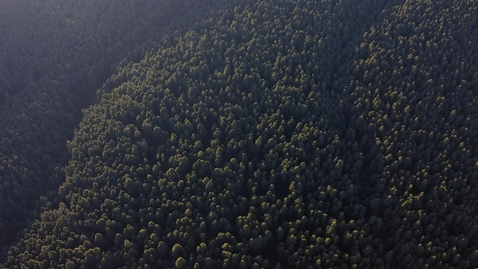 Miniatura para la entrada forest-full-of-trees-2085
