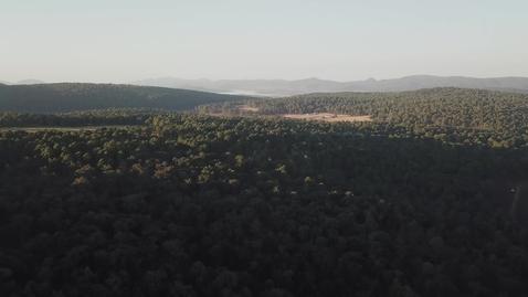 Miniatura para la entrada aerial-view-of-sunlight-over-treetops-516