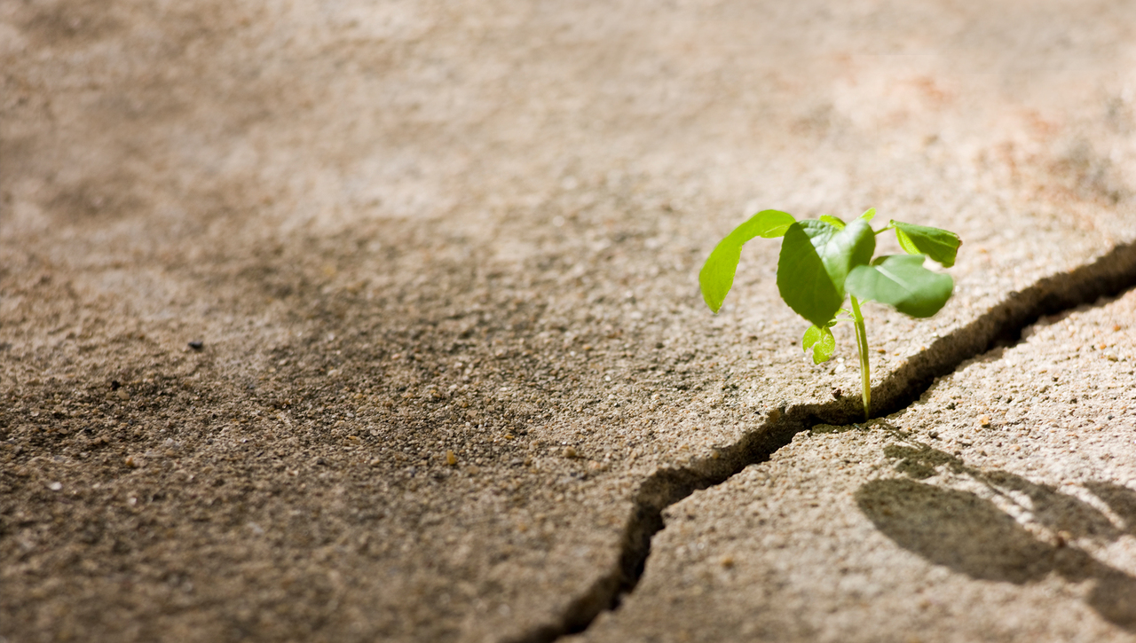 Tools for Resilience, Perseverance & Hope with Jessica Wright, PhD. 4.29.20