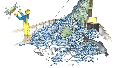 Thumbnail for entry Introduction to Fisheries and Aquaculture