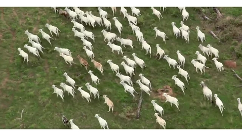 Thumbnail for entry The Savanna Grasslands