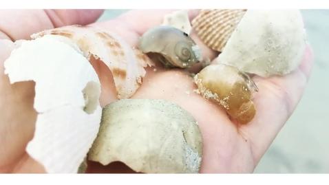 Thumbnail for entry Ocean Evolution