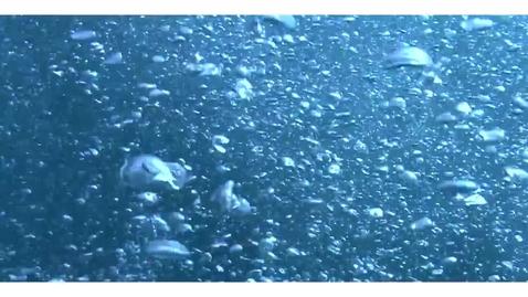 Thumbnail for entry Submarine Landslides and Tsunamis
