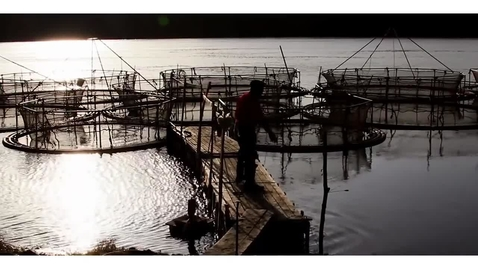 Thumbnail for entry Aquaculture and Mariculture
