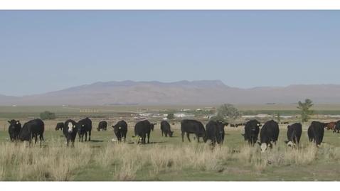 Thumbnail for entry Case Study: Livestock