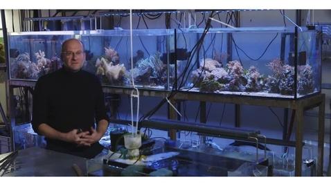 Thumbnail for entry Coastal Ecosystems
