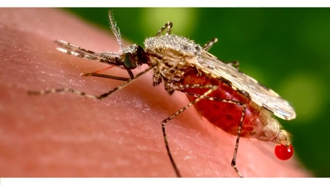 Thumbnail for entry New and Re-emerging Infectious Diseases