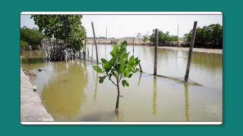 Thumbnail for entry Nature's solutions to coastal hazards: a case study from Indonesia