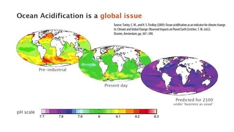 Thumbnail for entry Ocean Acidification