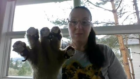 Thumbnail for entry Five Little Monkeys