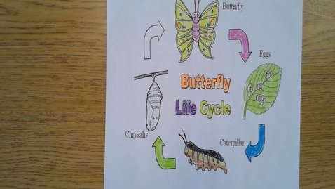 Thumbnail for entry Thursday Butterfly Lice Cycle