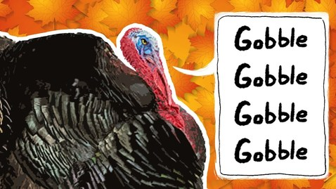 Thumbnail for entry Turkeys for Kids | Wild Turkeys | Animals for Kids | Thanksgiving bird