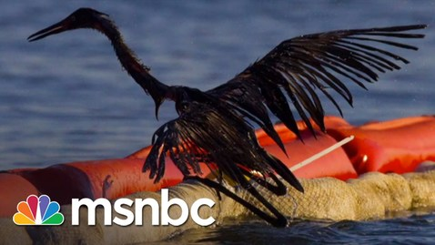 Thumbnail for entry BP Oil Spill 5 Years Later: Wildlife Still Suffering | msnbc