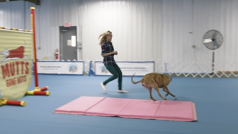 Thumbnail for entry Highest jump by a dog