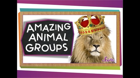 Thumbnail for entry Amazing Animal Groups | Science for Kids