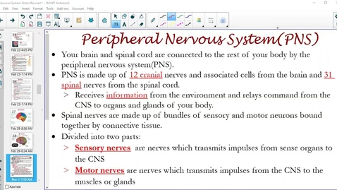 Thumbnail for entry Peripheral Nervous System(PNS)