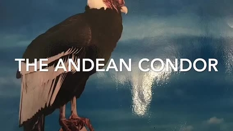 Thumbnail for entry Let's learn about the Andean Condor!
