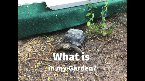 Thumbnail for entry Whats in my Garden?
