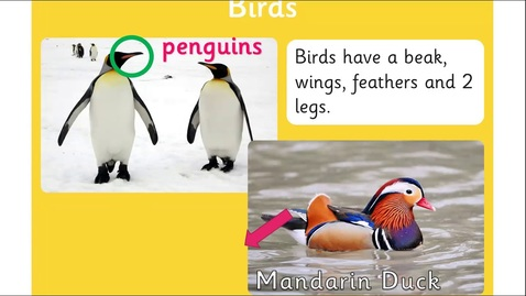 Thumbnail for entry Year 1 Science  -  Different Animal Groups - Amphibians, Reptiles, Mammals, Fish and Birds.