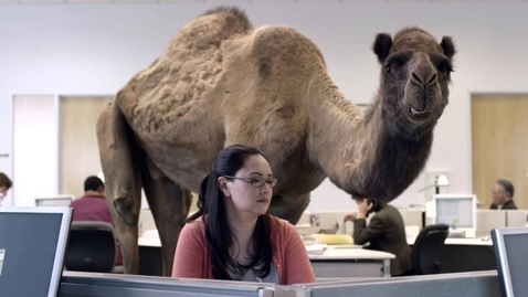 Thumbnail for entry Hump Day Camel Commercial - Happier than a Camel on Wednesday - Hump Daaaay!