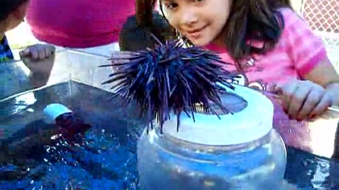 Thumbnail for entry Redwood Sea Urchin 2009-2010 Kinder
