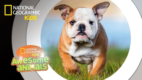 Thumbnail for entry Dog Genius | Awesome Animals