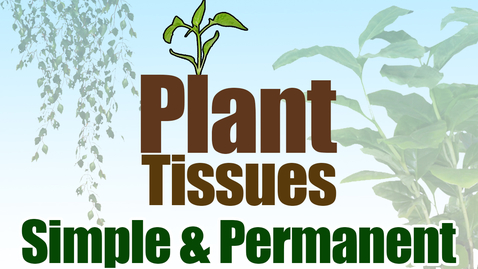 Thumbnail for entry Plant Tissues | Simple Permanent Tissues | Biology | Science | Letstute