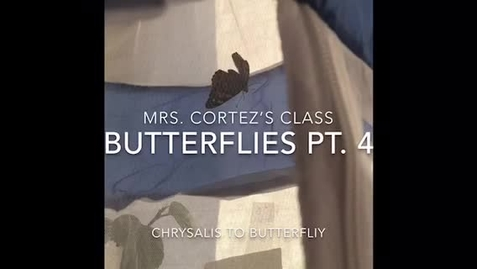 Thumbnail for entry Butterflies Pt. 4
