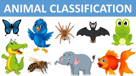 Thumbnail for entry Classification of Animals || Types of Animals || Animal Groups || Science videos