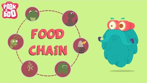 Thumbnail for entry What Is A Food Chain? | The Dr. Binocs Show | Educational Videos For Kids