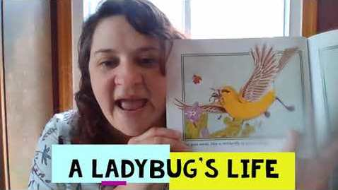 Thumbnail for entry A Ladybug's Life part 2
