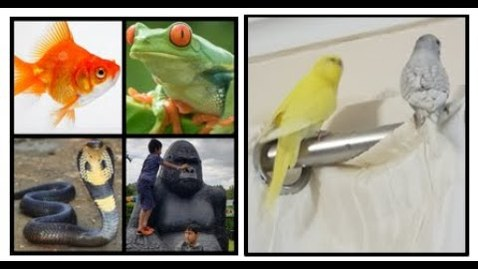 Thumbnail for entry Learn about fish, amphibians, birds, reptiles and mammals