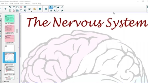 Thumbnail for entry How the Nervous System Works
