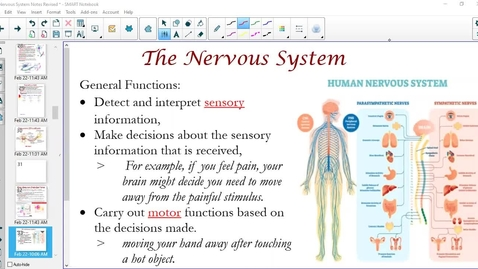 Thumbnail for entry Functions of the Nervous System