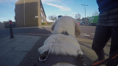 Thumbnail for entry Most guide dogs trained by an organisation