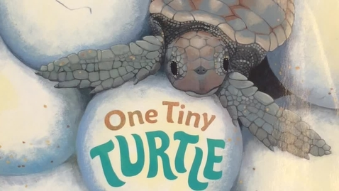 Thumbnail for entry One Tiny Turtle