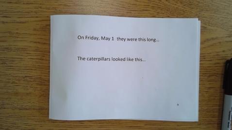 Thumbnail for entry Friday Catepillar Journal