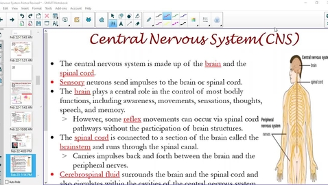 Thumbnail for entry Central Nervous System(CNS)