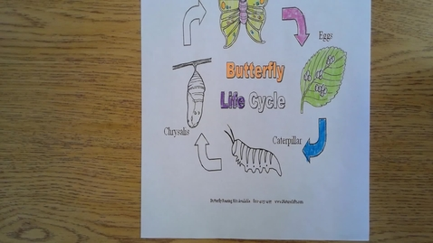 Thumbnail for entry Wednesday Butterfly Life Cycle