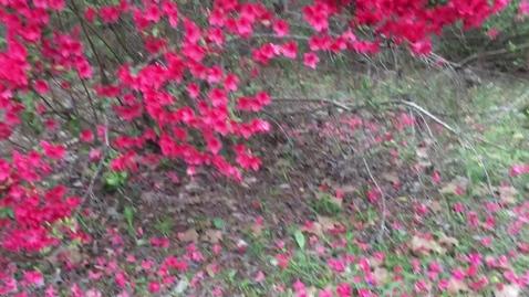 Thumbnail for entry 4th grade Science Rambin plants monocot
