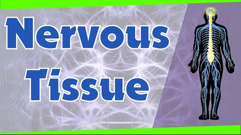 Thumbnail for entry Nervous Tissue | Types of Neurons | Biology | Science | Letstute