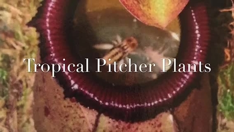 Thumbnail for entry Let's Learn About Tropical Pitcher Plants!