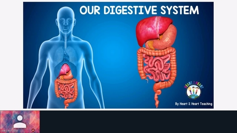 Thumbnail for entry Digestive System