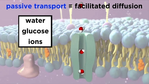 Thumbnail for entry Structure of the Cell Membrane: Active and Passive Transport